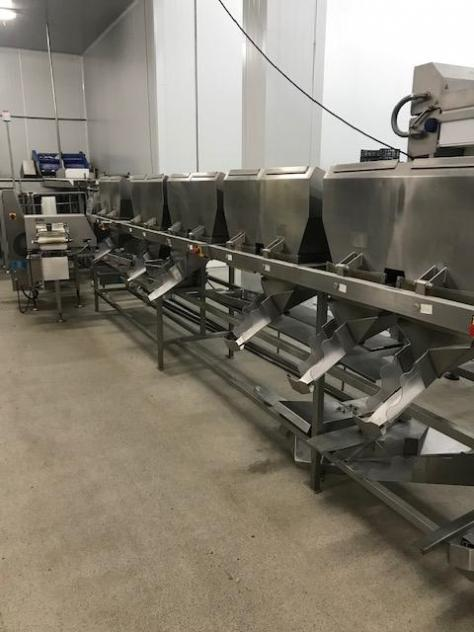 Maschine: AEW DELFORD 12 gates Fish processing machines